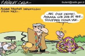 Ankara'dan Piton Kaçtı